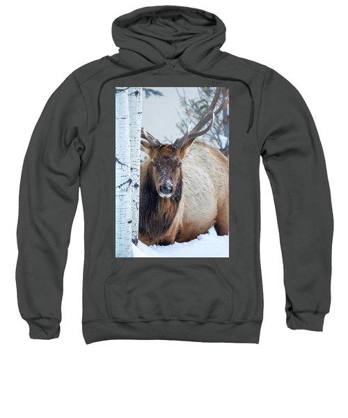 4 Wire Winter  Sweatshirt