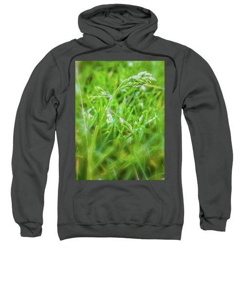 Nature Sweatshirt