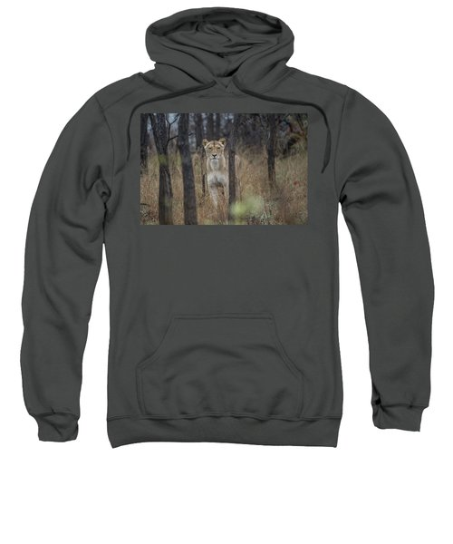 A Lioness In The Trees Sweatshirt