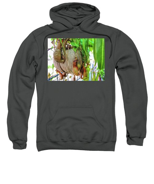 A Pitcher Plant On Our Terrace In Thailand Sweatshirt