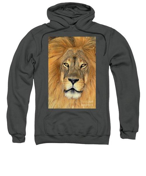 African Lion Portrait Wildlife Rescue Sweatshirt