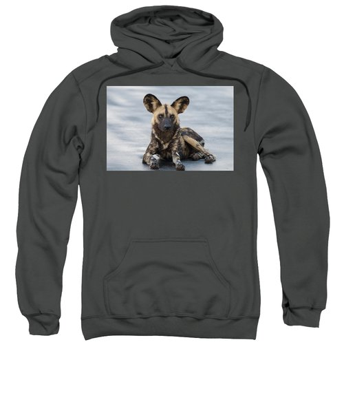 African Wild Dog Resting On A Road Sweatshirt