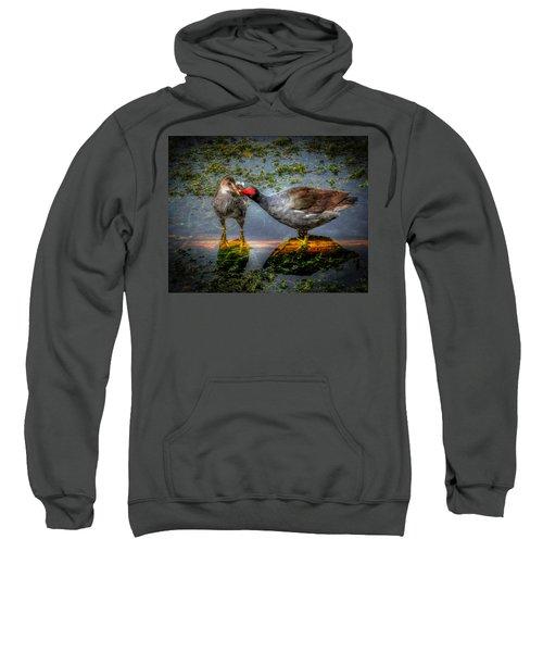 American Coot Sweatshirt