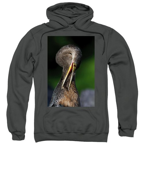 Anhinga Combing Feathers Sweatshirt