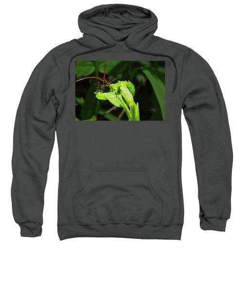 Assassin Bug Sweatshirt