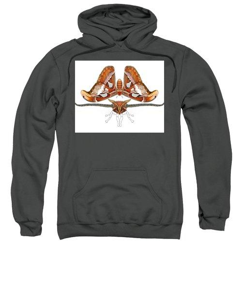 Atlas Moth4 Sweatshirt