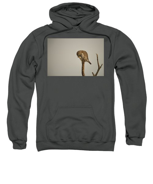 B41 Sweatshirt