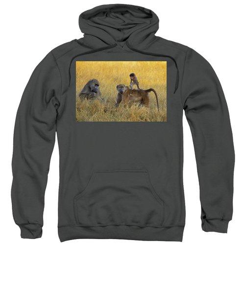 Baboons In Botswana Sweatshirt