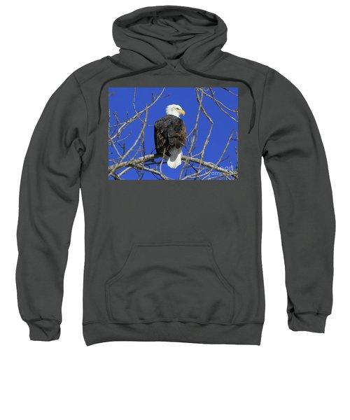 Bald Eagle And Blue Sky Sweatshirt
