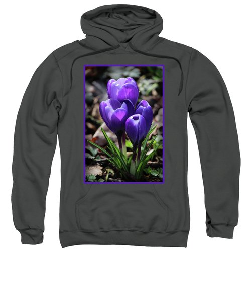 Beautiful Deep Purple Crocus Flowers Sweatshirt