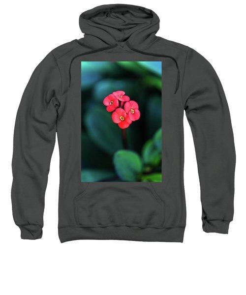 Beautiful Summer Flowers Sweatshirt