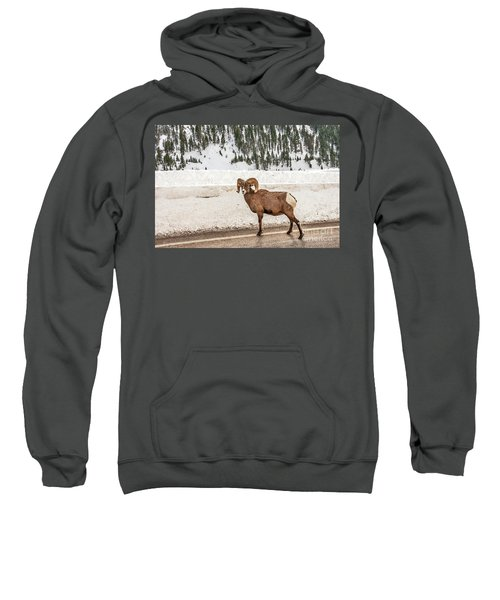 Bighorn Sheep Stopping Traffic Sweatshirt