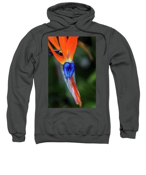 Birds Of Paradise Up Close Sweatshirt