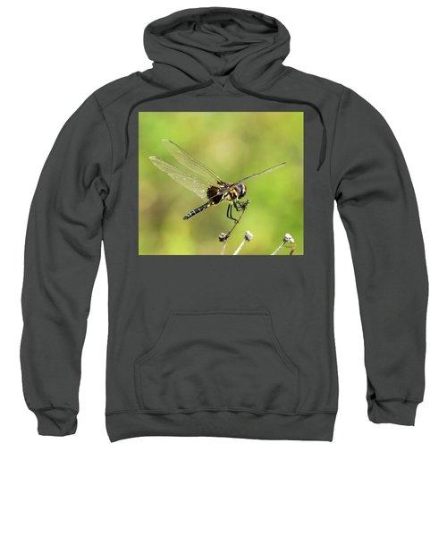 Black Saddlebags Dragonfly Sweatshirt