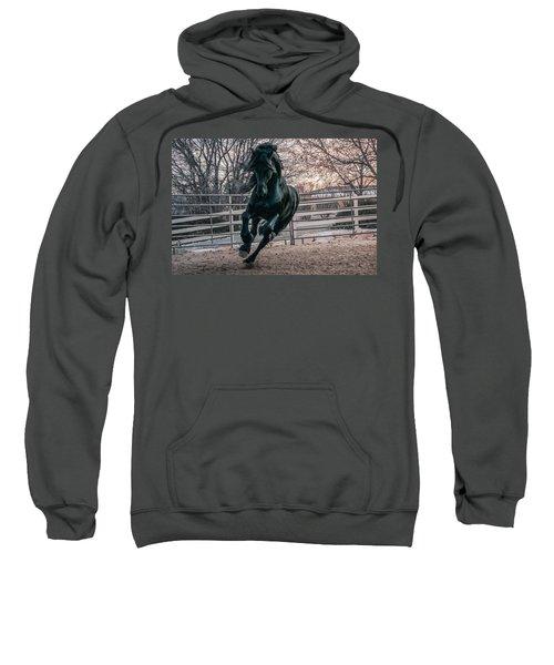 Black Stallion Cantering Sweatshirt