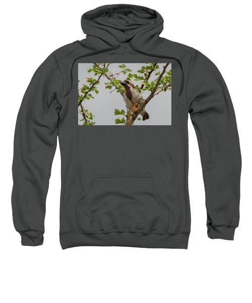 Black-throated Barbet Sweatshirt