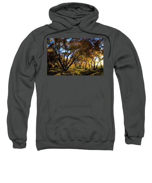 Bosque Color Sweatshirt