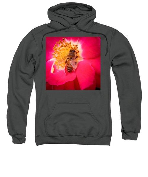 Brilliant Bee Sweatshirt