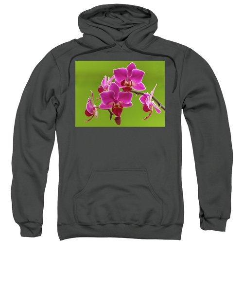 Brilliant Pink Orchid Sweatshirt