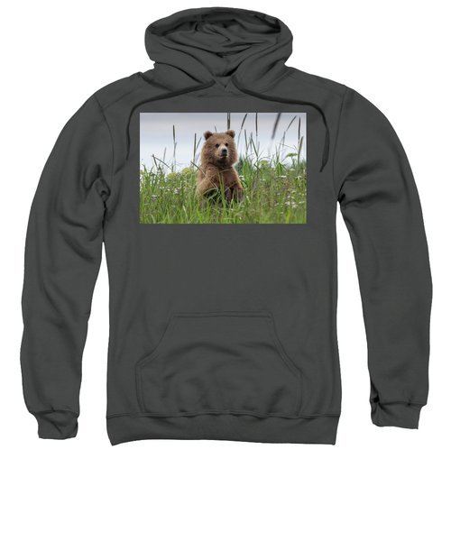 Brown Bear Cub In A Meadow Sweatshirt