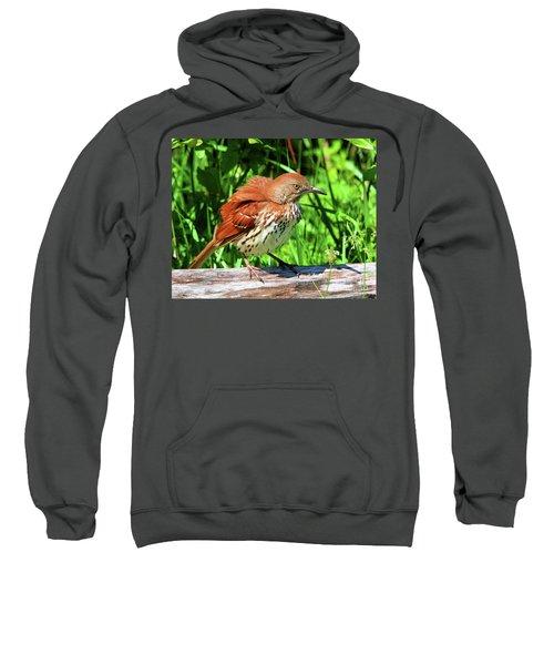 Brown Thrasher Sweatshirt