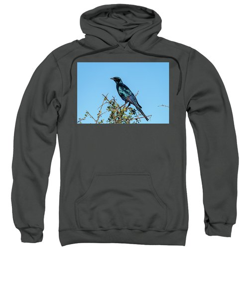 Burchell's Starling Sweatshirt