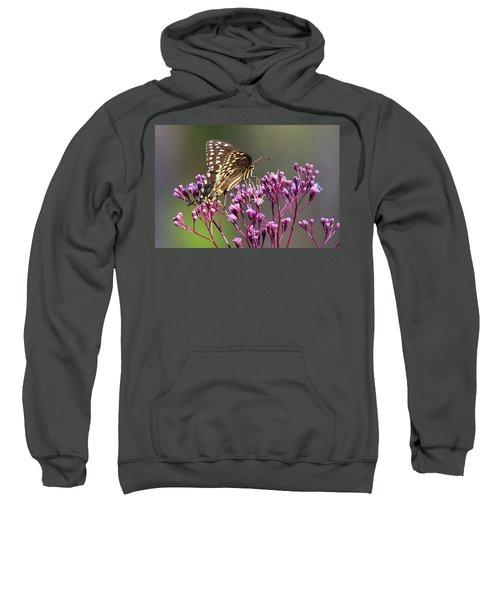 Butterfly On Wild Flowers Sweatshirt
