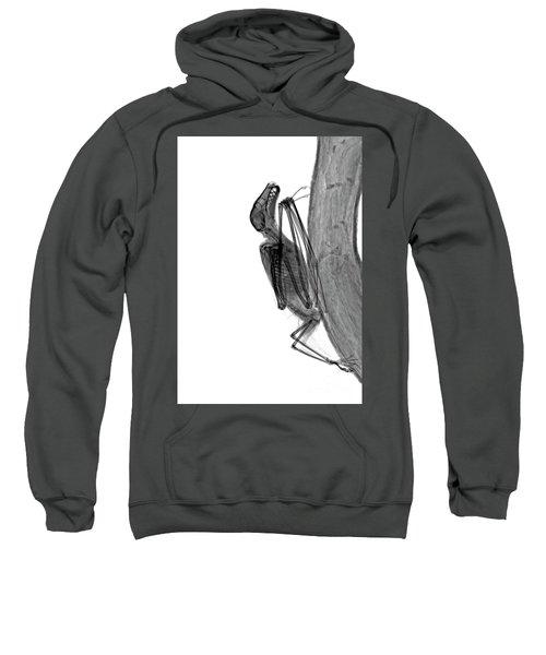 C037/9604 Sweatshirt