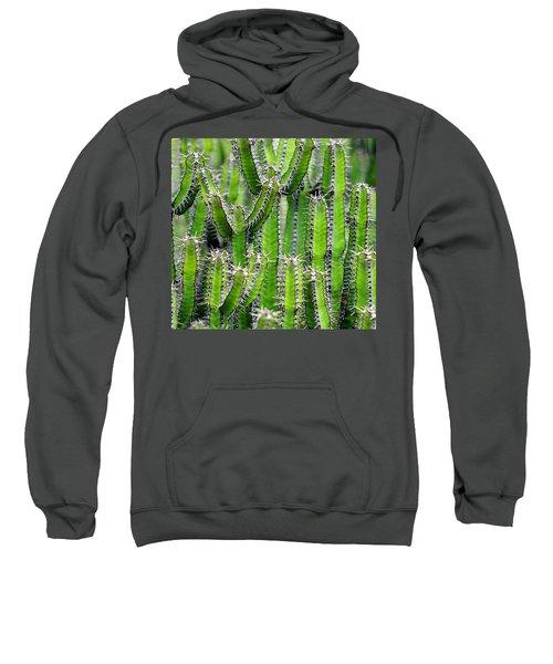 Cacti Wall Sweatshirt