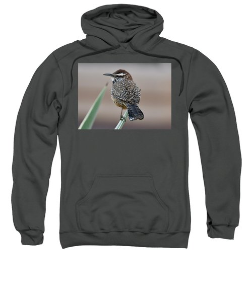 Cactus Wren Sweatshirt