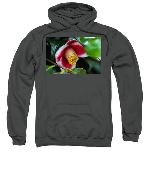 Camellia Bloom And Leaves Sweatshirt