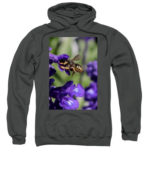 Carder Bee On Salvia Sweatshirt