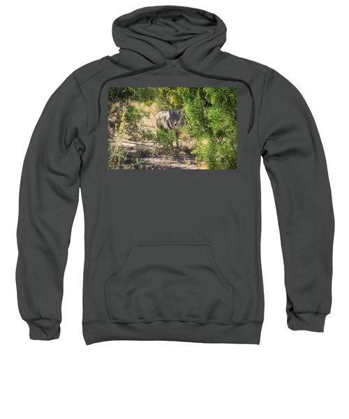 Cautious Coyote Sweatshirt