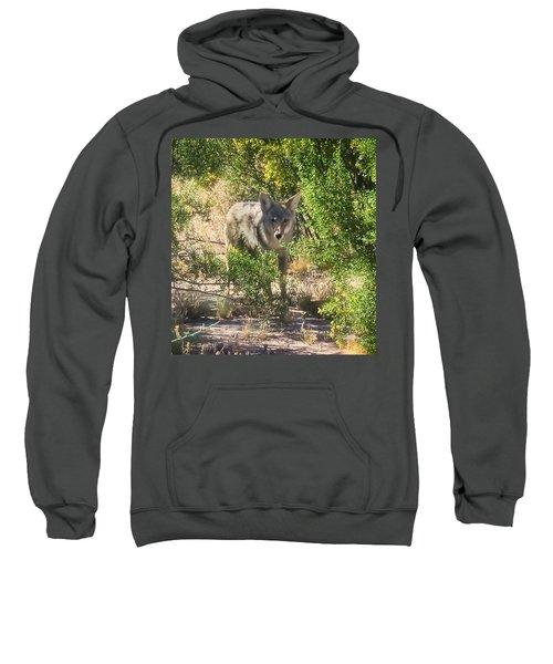 Cautious Coyote Sweatshirt