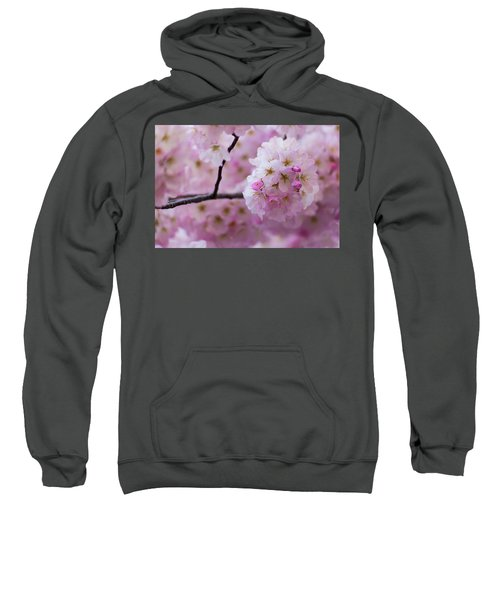 Cherry Blossom 8624 Sweatshirt