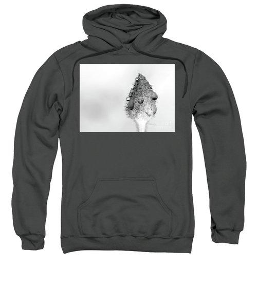 Clematis Bud In Rain Sweatshirt