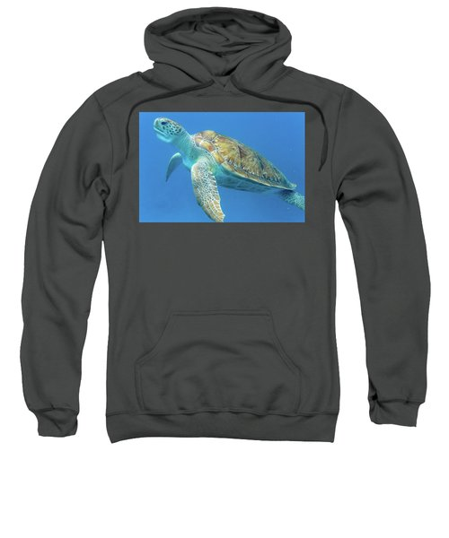 Close Up Sea Turtle Sweatshirt