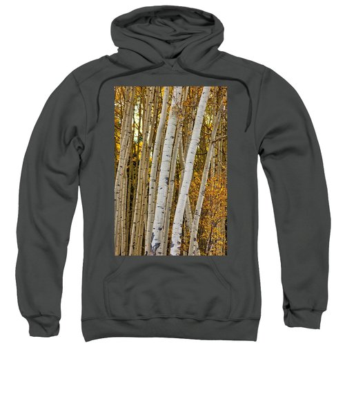 Colorado Aspens Sweatshirt
