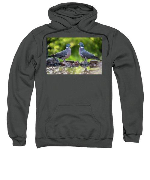 Common Wood Pigeons Meeting At The Waterhole Sweatshirt