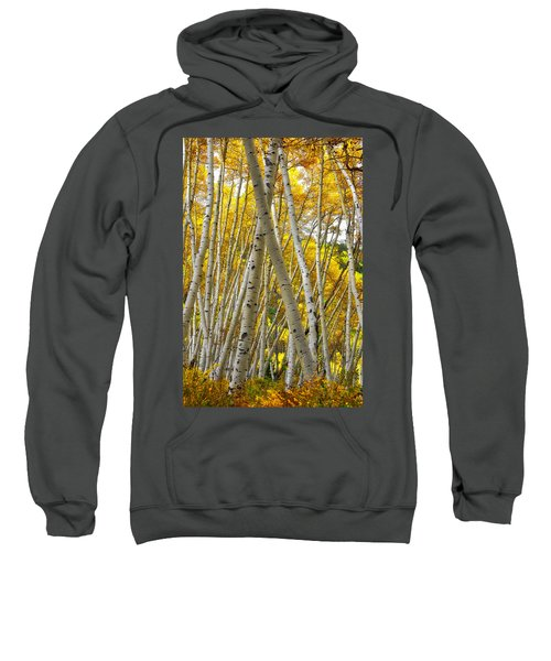 Crossed Aspens Sweatshirt