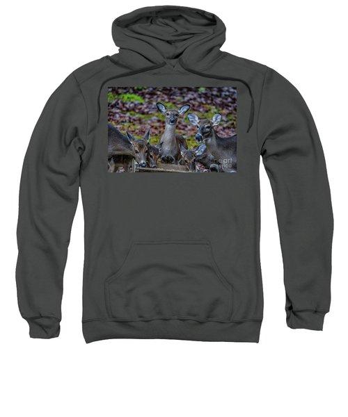 Deer Gathering Sweatshirt