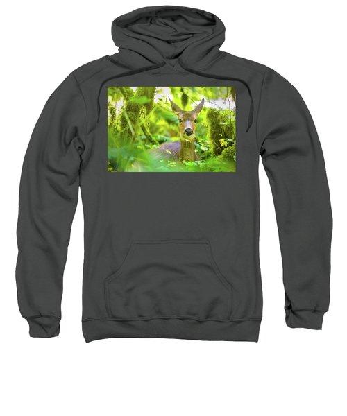 Deer In Rainforest 3 Sweatshirt