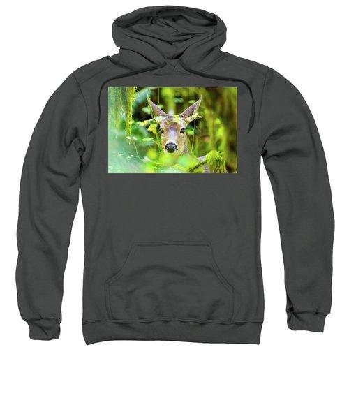 Deer In Rainforest Sweatshirt