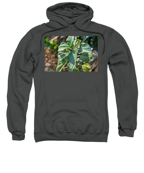 Desert Plant Life Sweatshirt