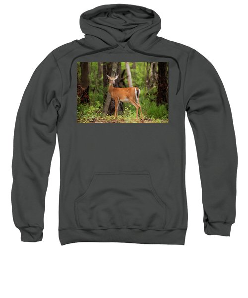 Doe, A Deer, A Female Deer Sweatshirt