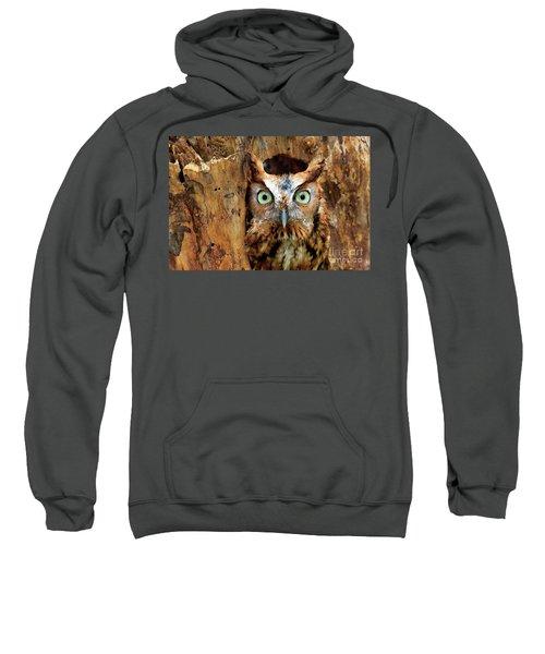 Eastern Screech Owl Perched In A Hole In A Tree Sweatshirt