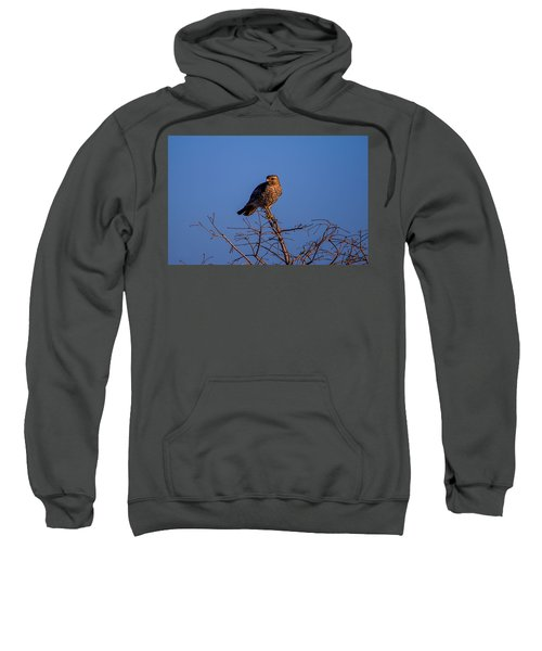 Evening Look Out Sweatshirt