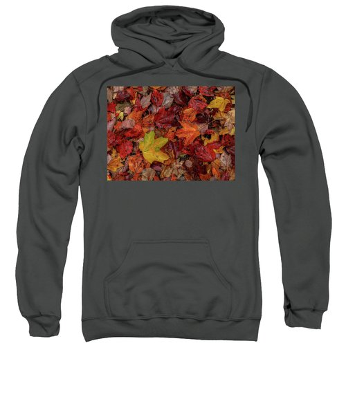 Fall Colors Sweatshirt