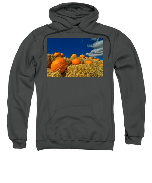 Fall Pumpkins Sweatshirt