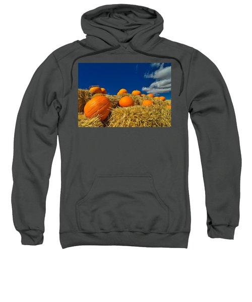 Fall Pumpkins Sweatshirt